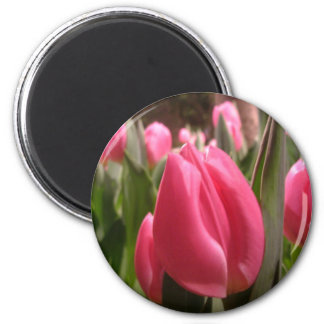 Pink tulips 2 inch round magnet