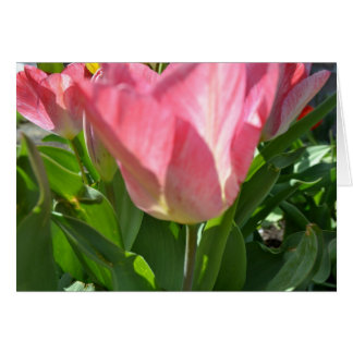 Pink Tulips and Green Card