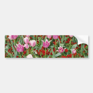 Pink Tulips and pansies flowers Bumper Stickers
