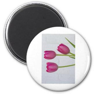 Pink Tulips and White Brick Wall Fridge Magnet