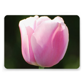 Pink Tulips Announcement