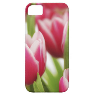 Pink tulips iPhone 5 cover