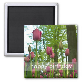 Pink Tulips DSC0867 2 Inch Square Magnet