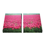 Pink tulips field canvas print