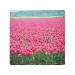 Pink tulips field metal print