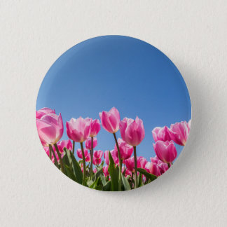 Pink tulips field with blue sky button