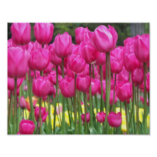 Pink Tulips Floral Photo Poster