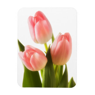 Pink Tulips Flower Floral Tulip Flowers Template Magnet