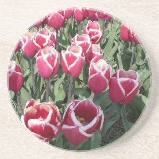 Pink tulips from Holland Sandstone Coaster