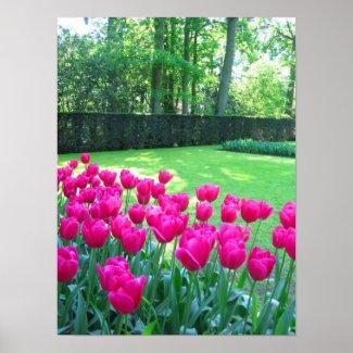 Pink tulips garden poster