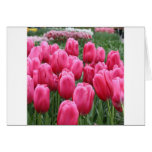 Pink Tulips Greeting Cards