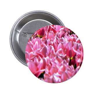 Pink Tulips in a Field Pinback Buttons
