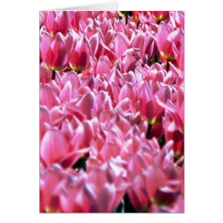 Pink Tulips in a Field Card