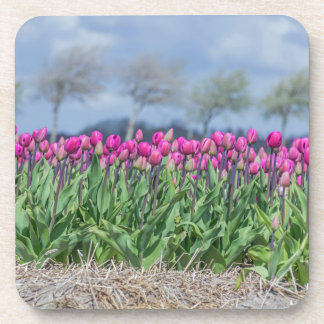 Pink tulips in a field hard plastic coasters