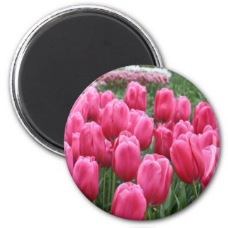 Pink Tulips Refrigerator Magnets
