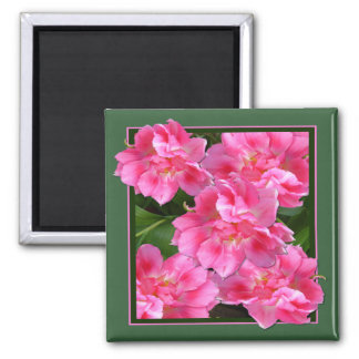 PINK TULIPS  ~  Magnet  # 2