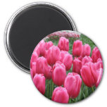 Pink Tulips Magnets