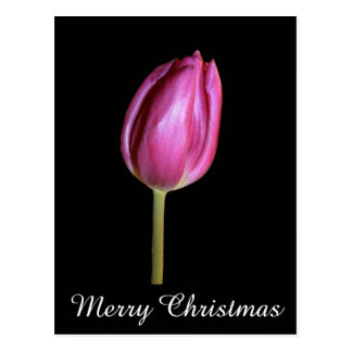 Pink Tulips Merry Christmas Floral Flower Photos Postcard