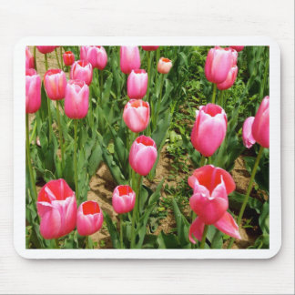 Pink tulips mouse pads