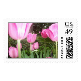 pink tulips postage stamp