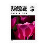 Pink Tulips Postage Stamps