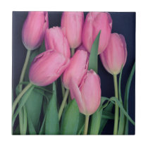 Pink Tulips Tile