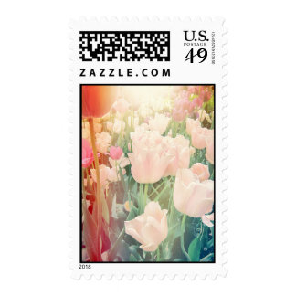 Pink Tulips with Light Leaks Postage