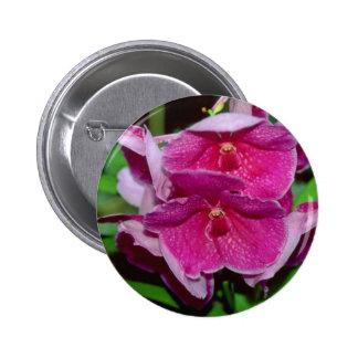 Pink Vanda flowers Pinback Button
