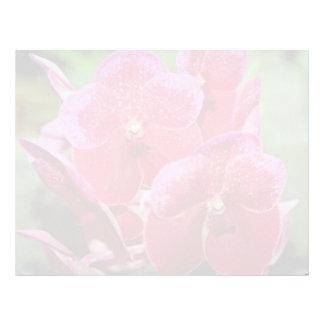 Pink Vanda flowers Letterhead