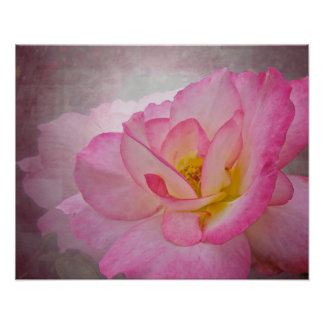 Pink Victorian Rose Poster