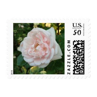 Pink Vintage Rose Postage