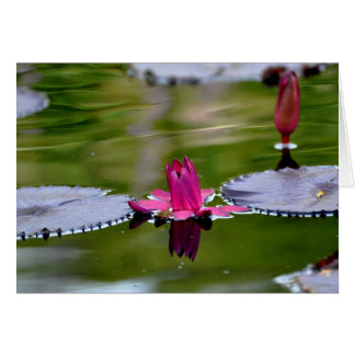 Pink Water lilies. Card