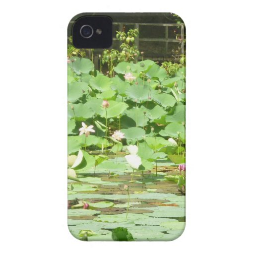Pink Water Lilies iPhone 4 Cases