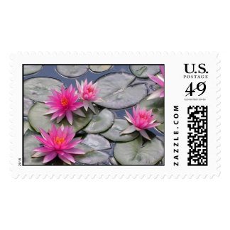 Pink Water Lilies Postage