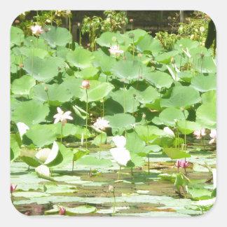 Pink Water Lilies Sticker