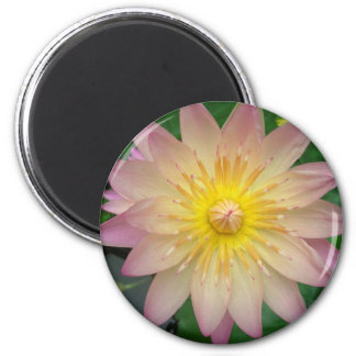 Pink Water Lily 2 Inch Round Magnet
