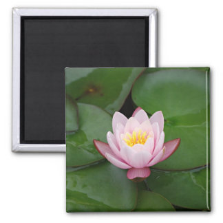 Pink water lily 2 inch square magnet