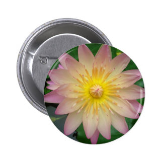Pink Water Lily Pins