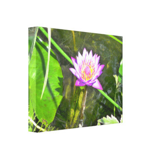 Pink Water Lily Canvas