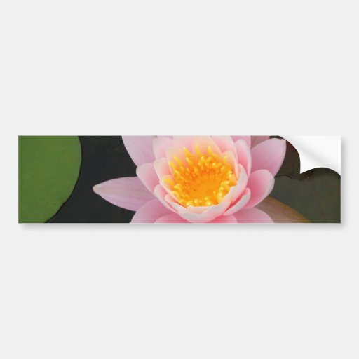 Pink Water Lily Car Bumper Sticker