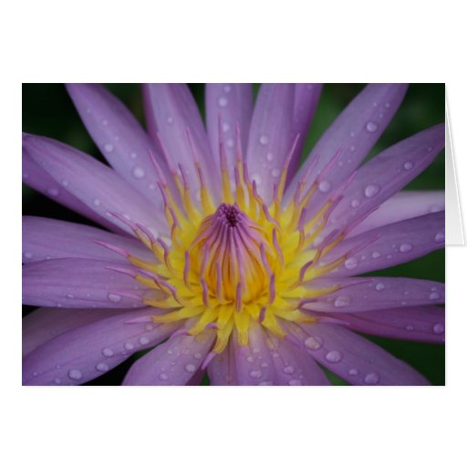 Pink Water Lily Card