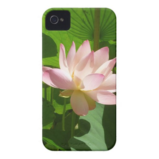 Pink Water Lily iPhone 4 Cover