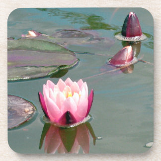 Pink water lily drink coaster