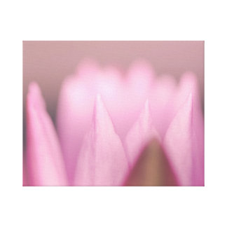 pink water lily flower canvas print