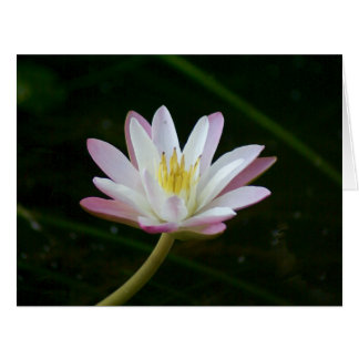 Pink water lily flower, Photo Big Greeting Card