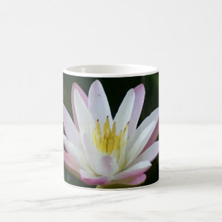 Pink water lily flower, Photo Coffee Mug