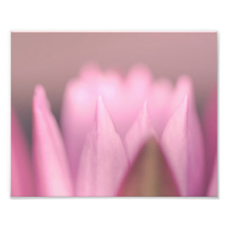 pink water lily flower photo print