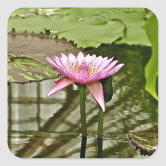 PINK WATER LILY IN A POND SQUARE STICKER