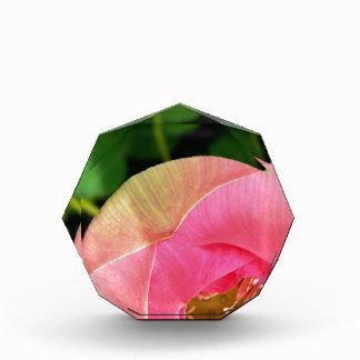 PInk Water Lily Lotus Acrylic Award