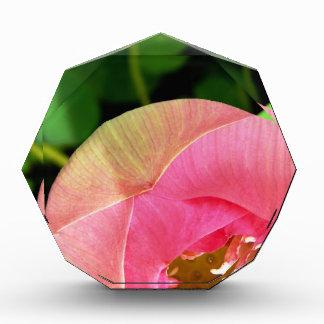 PInk Water Lily Lotus Award